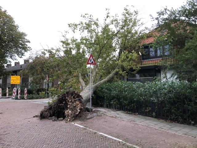P 2 BDH-01 Stormschade (boom) Rusthofflaan Essenlaan SASSHM 161230