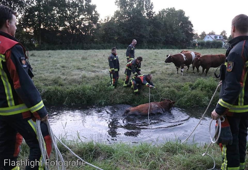 P 2 Dier te water Sassenheimse IJsclub Kagerweide SASSHM 161230